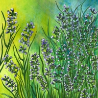 Lavender-Ballet